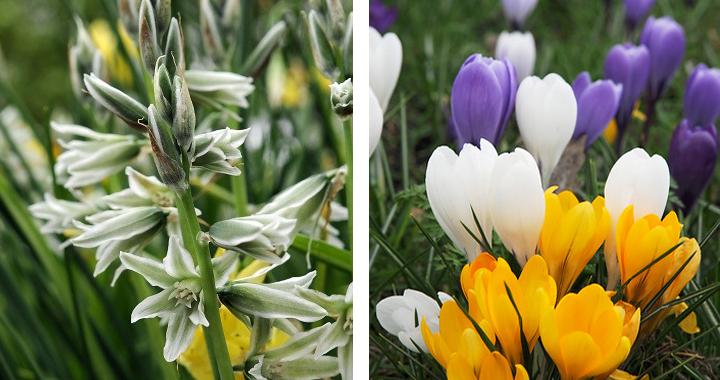 Er zijn heel veel soorten bloembollen!