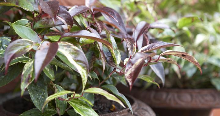 Besheester: de natuurlijke smaakmaker die je tuinhart betovert