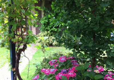 Bloeiende hortentsia