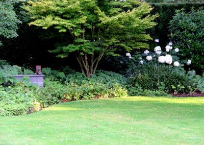 Mooie meerstammige esdoorns in deze villatuin